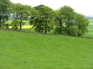 Green,_green_grass,_and_yellow,_yellow_rape._-_geograph.org.uk_-_1307823