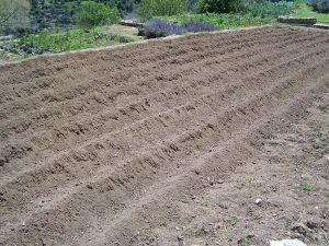 798px-Plowed_Field_