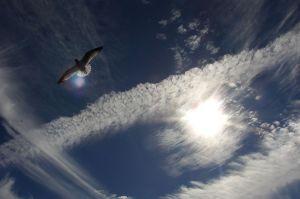 800px-Sky-Sun-Clouds-Bird-1483