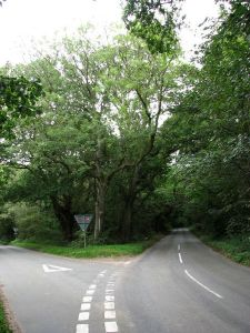 450px-Where_Kelling_Road_forks_off_to_the_northwest_-_geograph.org.uk_-_555341