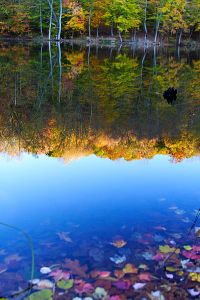 400px-Fall_foliage_colors_lake_reflections_-_West_Virginia_-_ForestWander