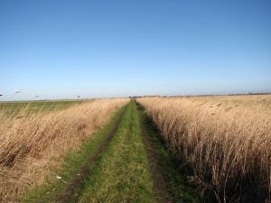 Straight_path_through_Gapton_Marshes_-_geograph.org.uk_-_674249