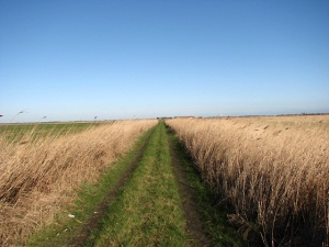 Straight_path_through_Gapton_Marshes_-_geograph.org.uk_-_674249
