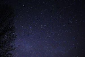 800px-Night_Sky_Stars_Trees_03