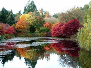 800px-Autumn_colours_at_VanDusen_Botanical_Garden