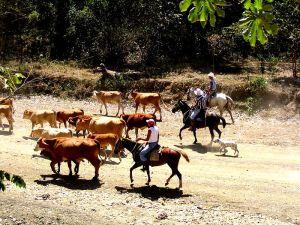 800px-Costa_Rican_Cowboys
